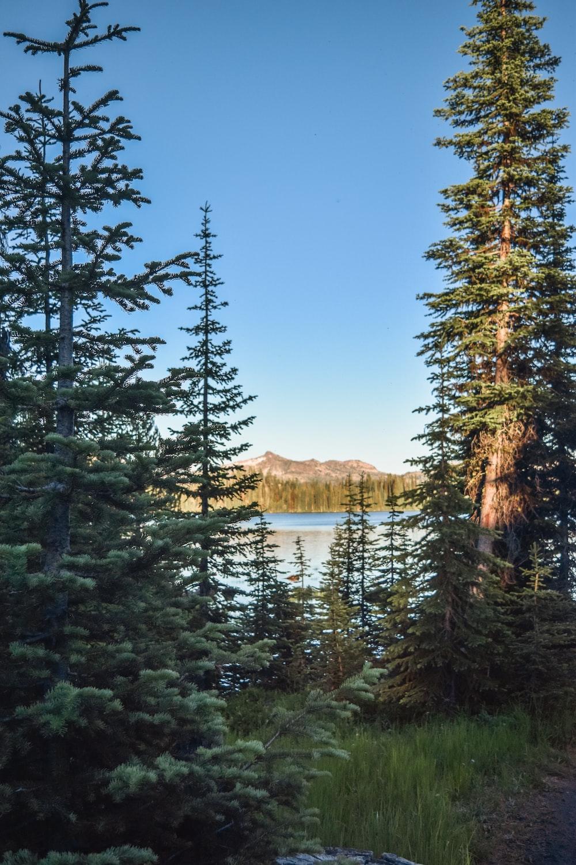 Travel Guide: Best Destinations Near Mesa Falls Apartments-image