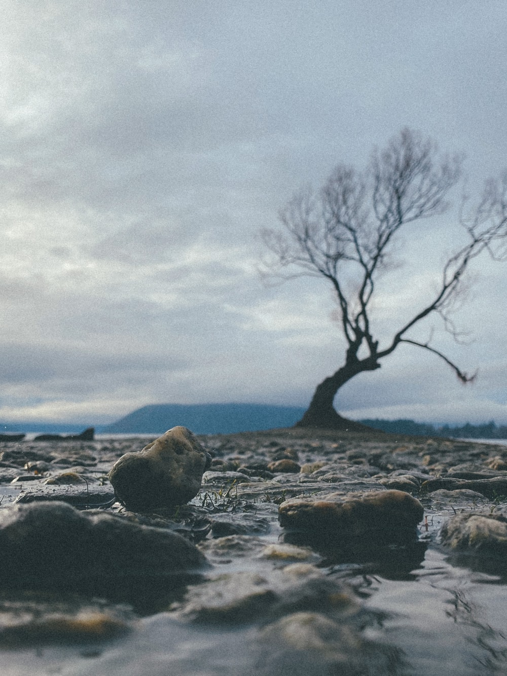 bare tree on rocky shore during daytime