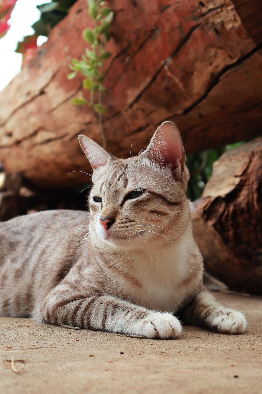 brown tabby cat on brown rock