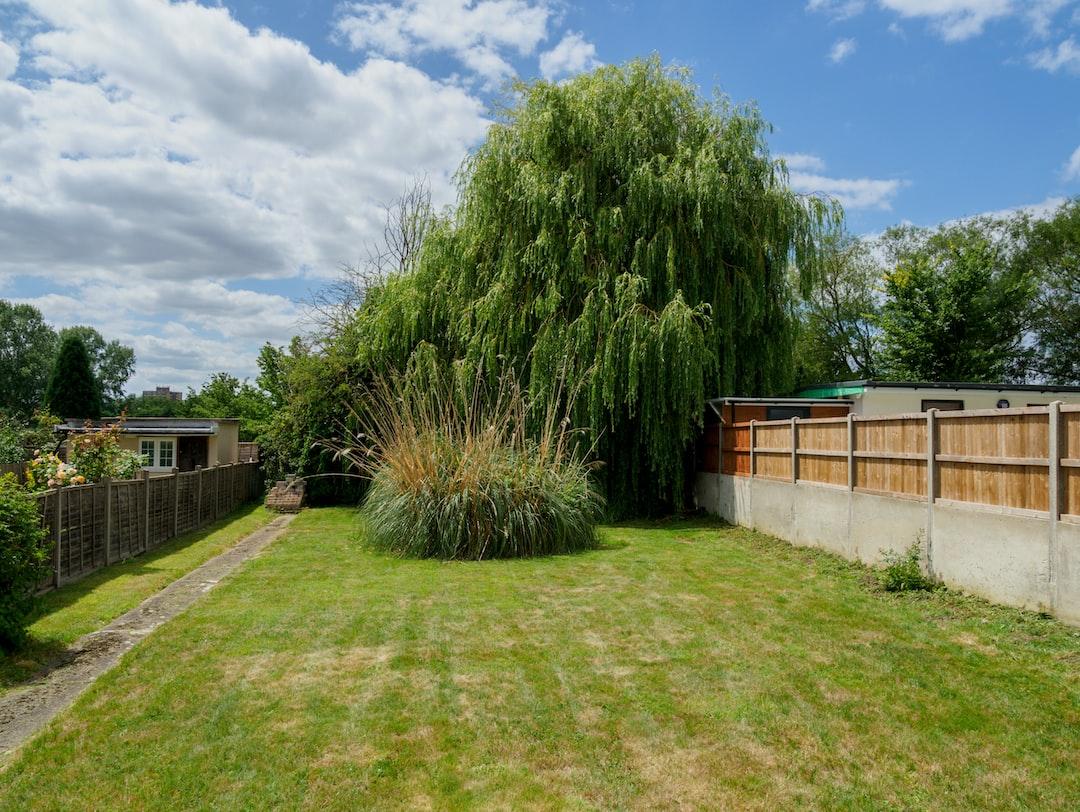 garden, back garden, grass, blue sky, willow, english garden, pampas grass, summer,