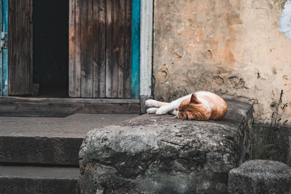 orange tabby cat lying on gray rock