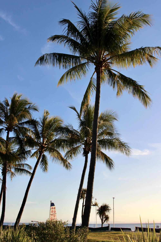 green palm tree during daytime
