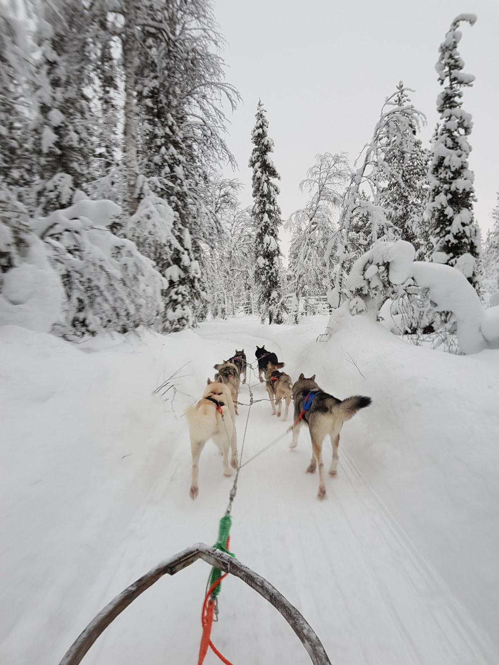 dogs on snow covered ground during daytime