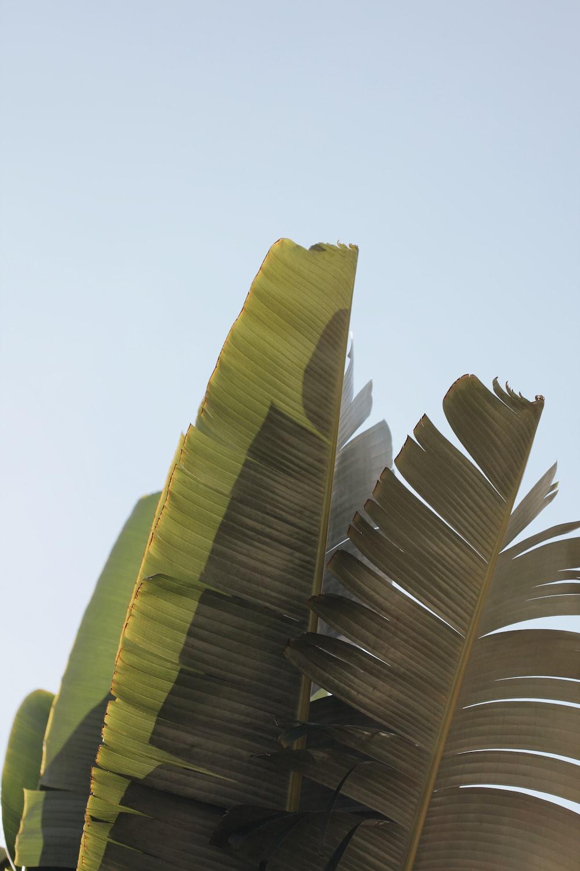 green banana leaf during daytime