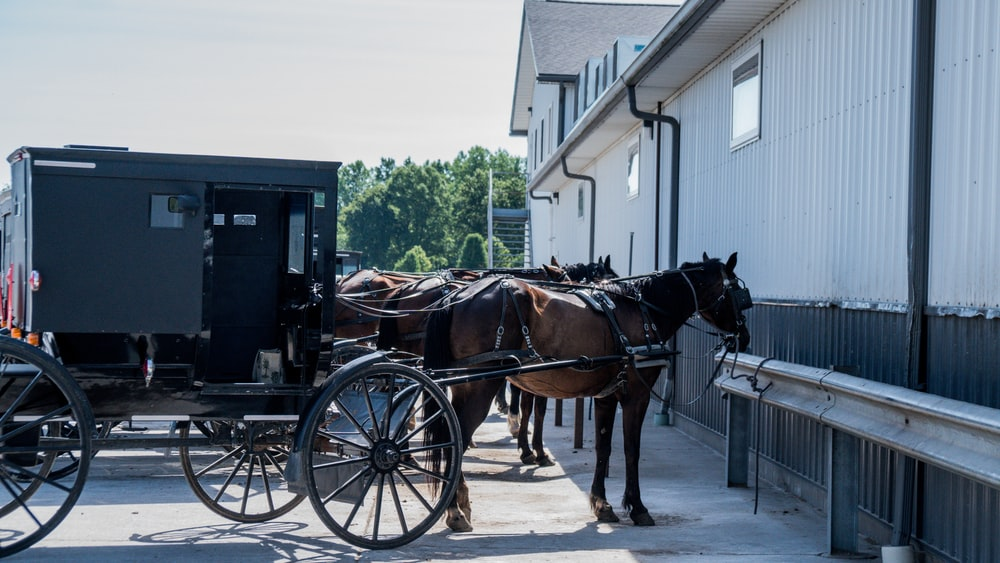 black horse with brown wooden carriage