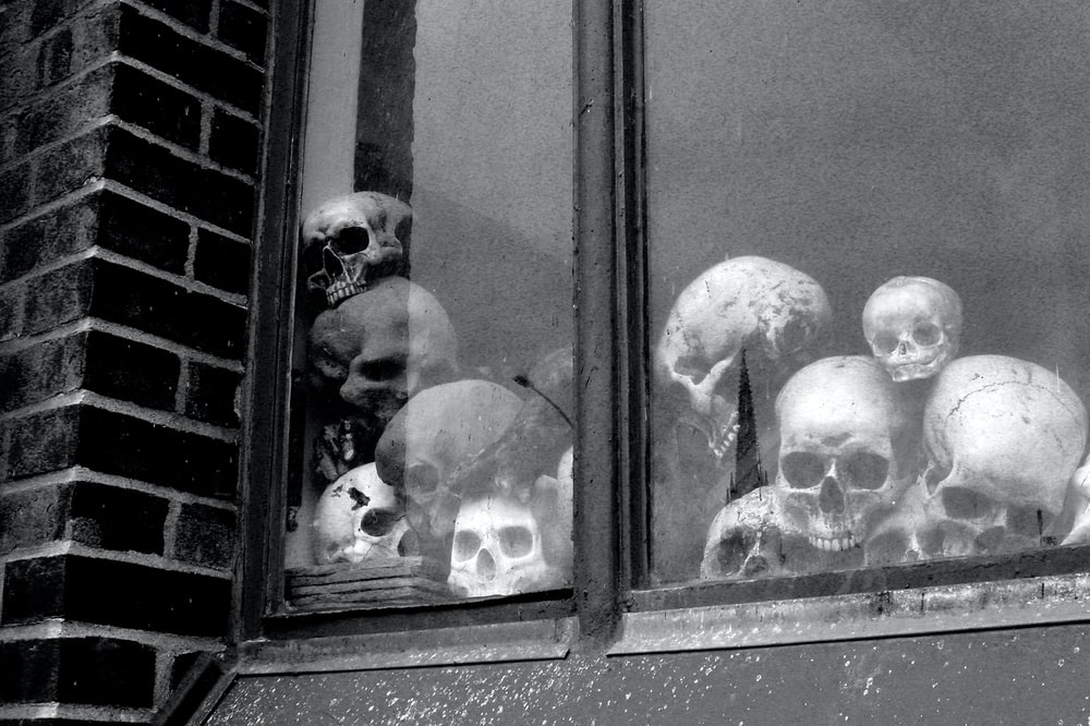 grayscale photo of 2 dogs in window
