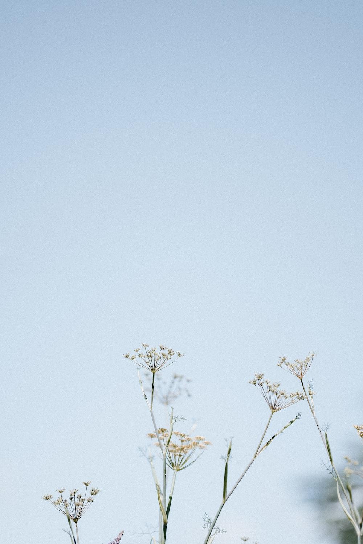 green leaf tree under blue sky during daytime