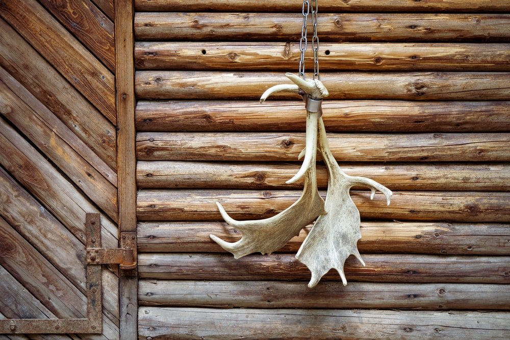 white animal skull on brown wooden wall