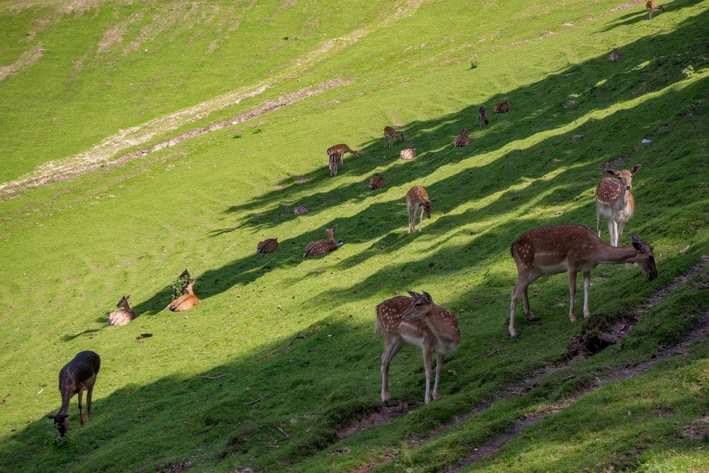 brown and white deer on green grass field during daytime