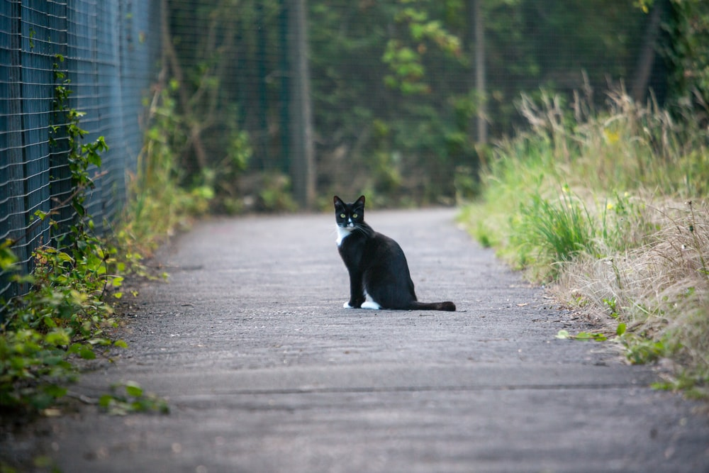 black cat on gray asphalt road during daytime