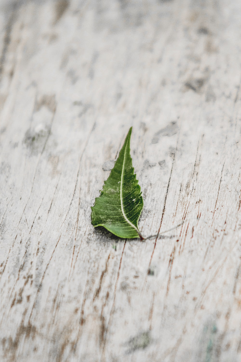 green leaf on white wooden table