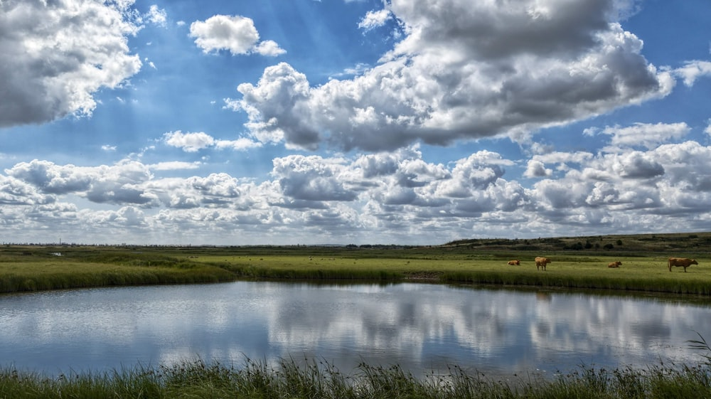 green grass field beside lake under white clouds and blue sky during daytime