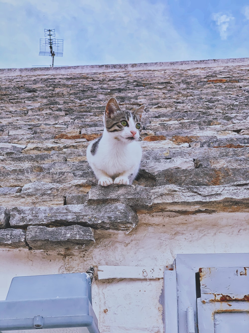 white and brown cat on gray concrete wall during daytime