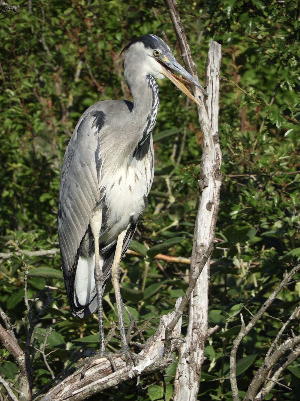 grey heron perched on brown tree branch during daytime