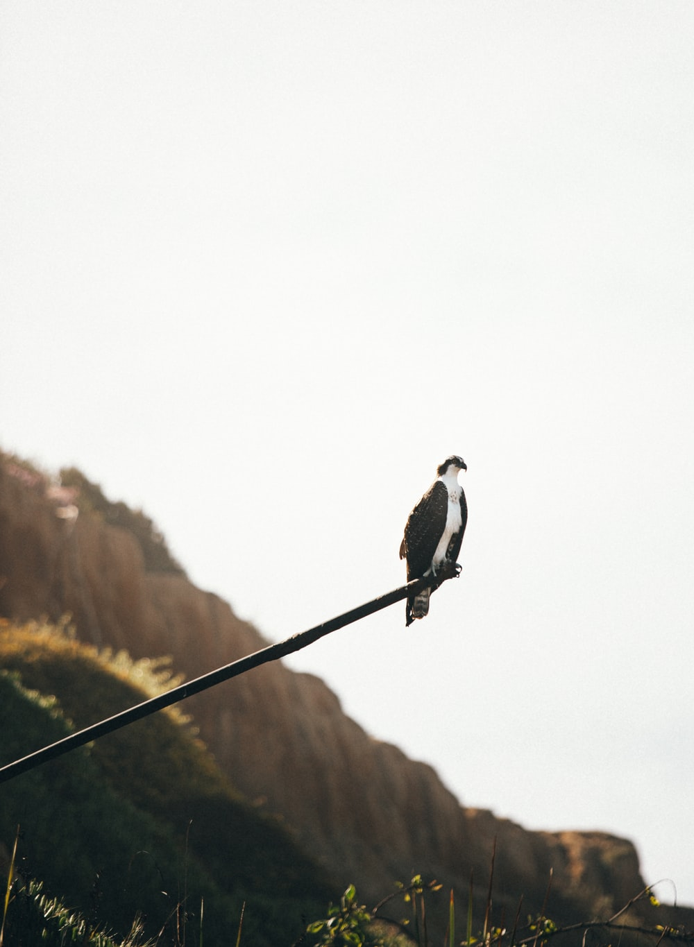 black and white bird on black wire during daytime