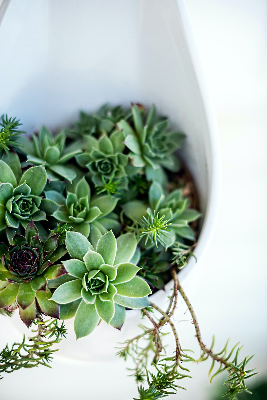 green succulent plant on white ceramic pot
