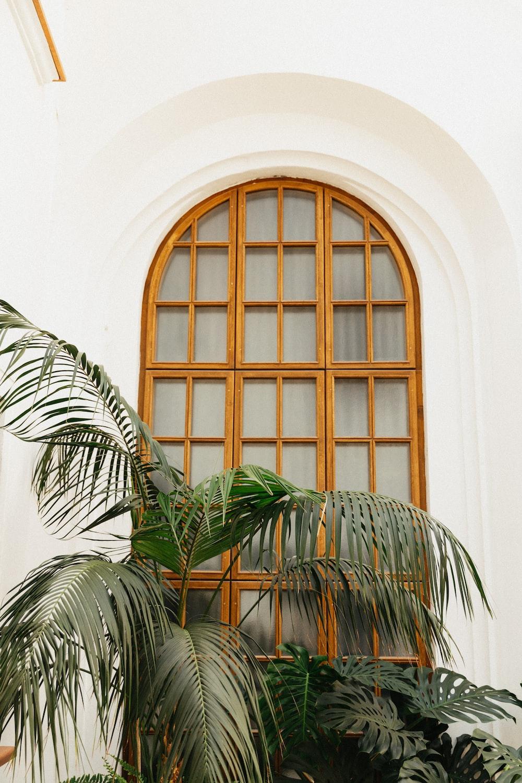 green palm plant beside brown wooden framed glass window
