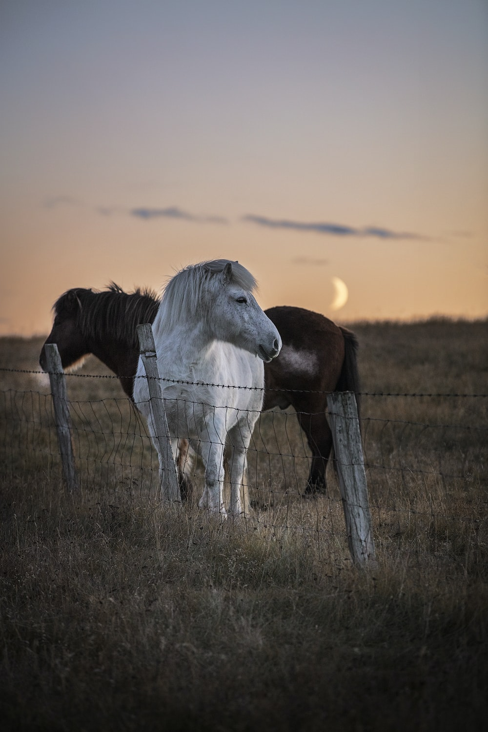 white horse on brown grass field during sunset