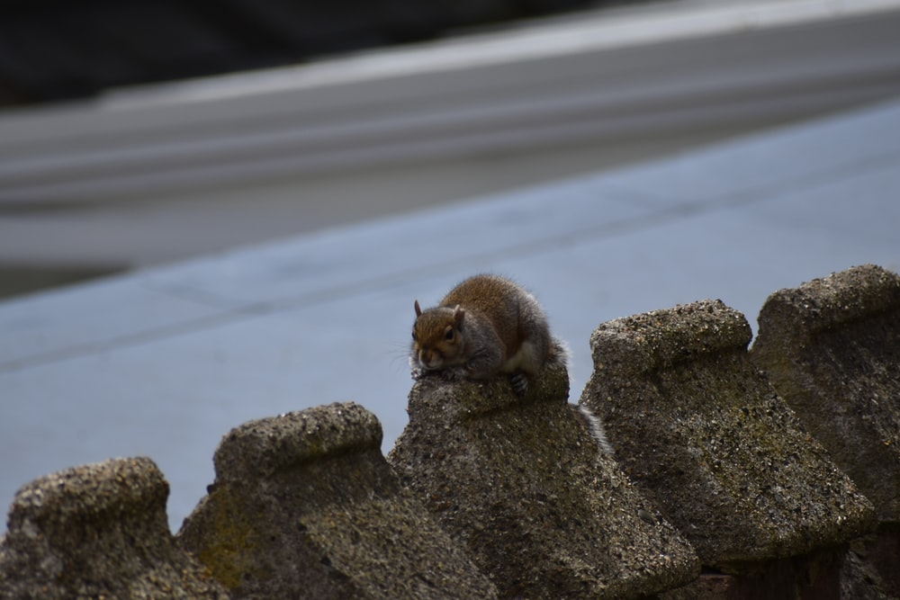 brown tabby cat on gray rock