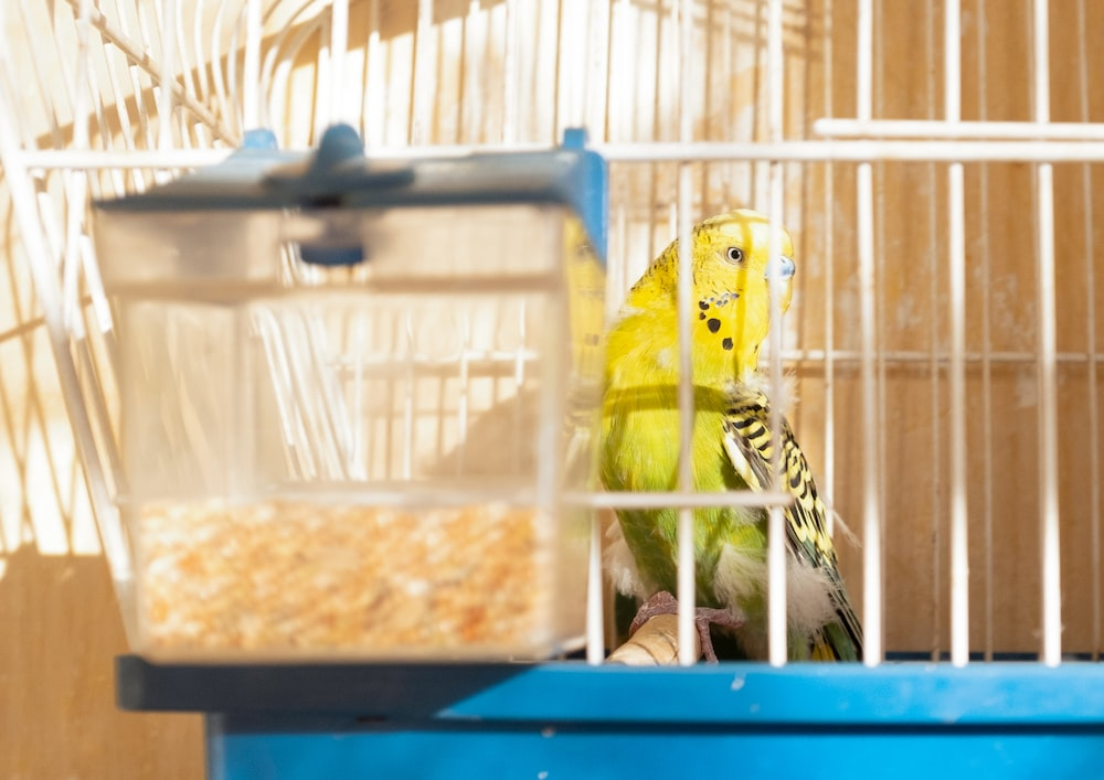 yellow and black bird in cage