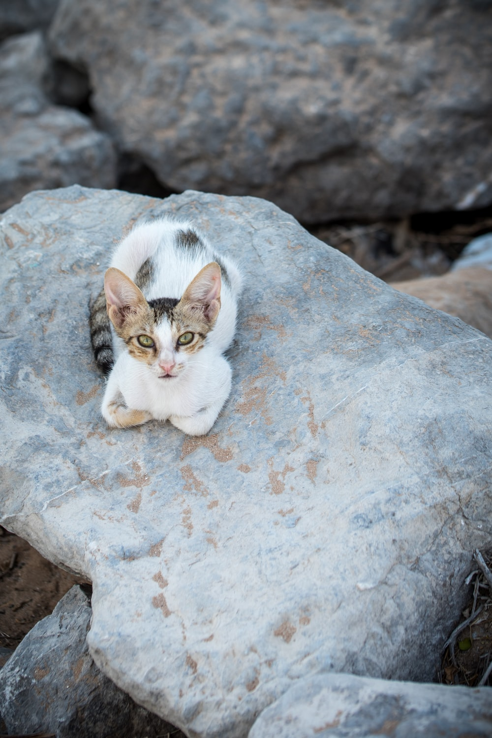 white and brown cat on gray rock