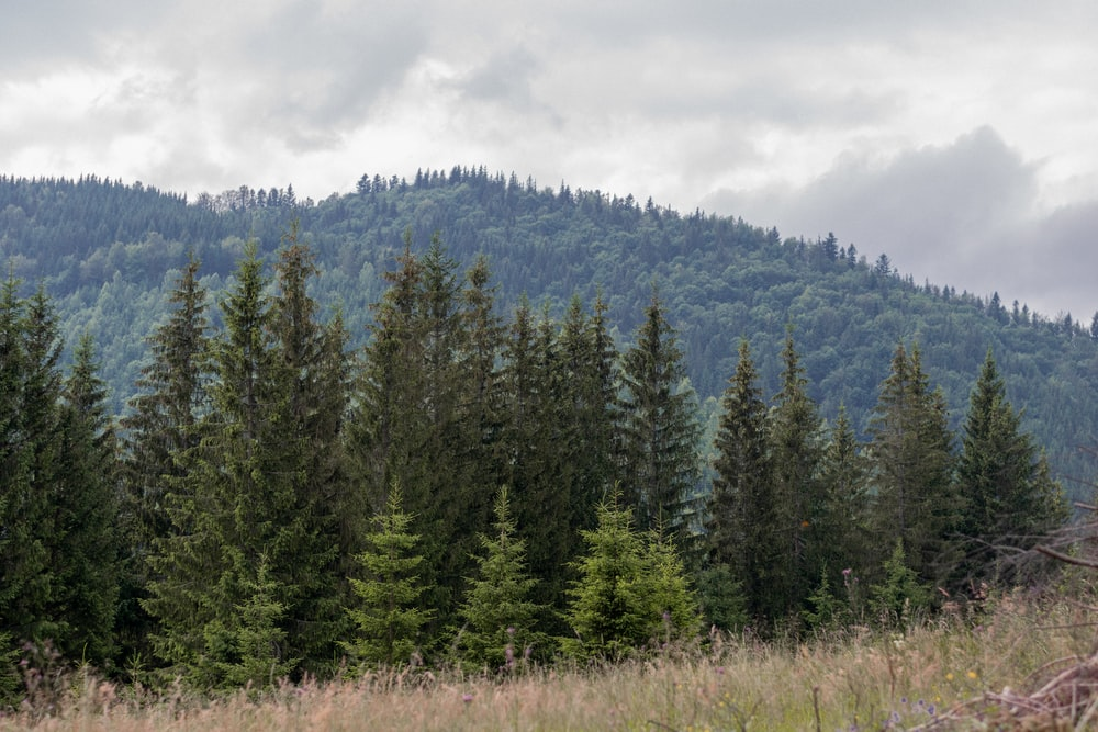 green pine trees under white clouds during daytime