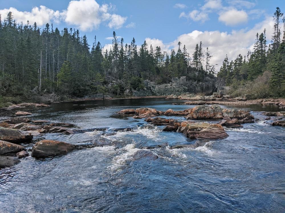 green pine trees beside river under blue sky during daytime