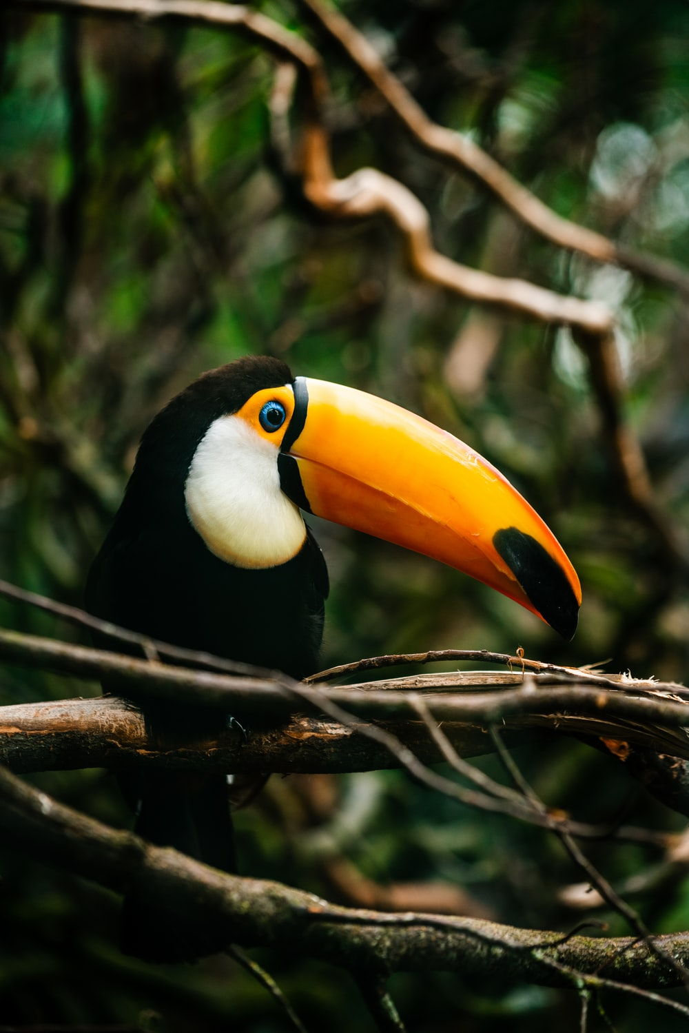 black yellow and red bird on brown tree branch