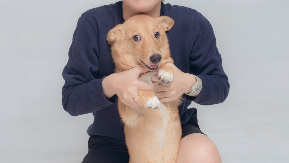person in black jacket holding brown short coated dog