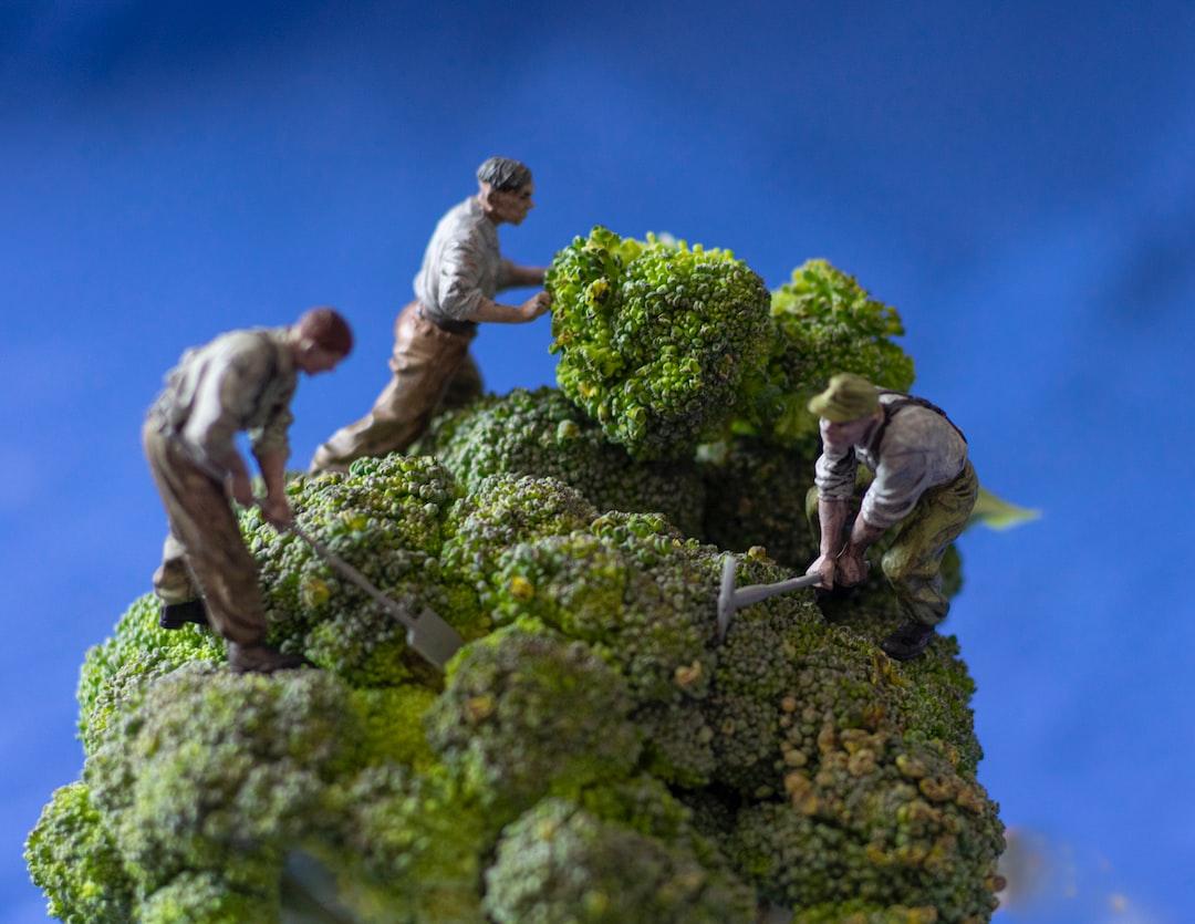 Gardening Tips for Broccoli
