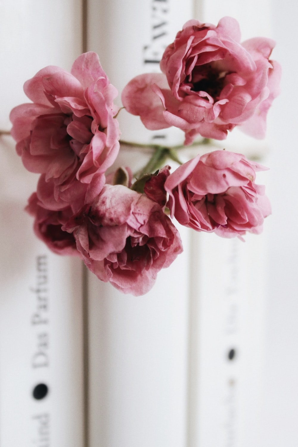 pink flowers on white book page
