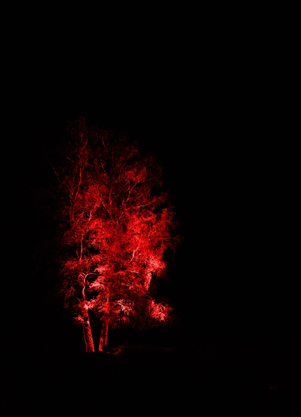 red and black fire during night time