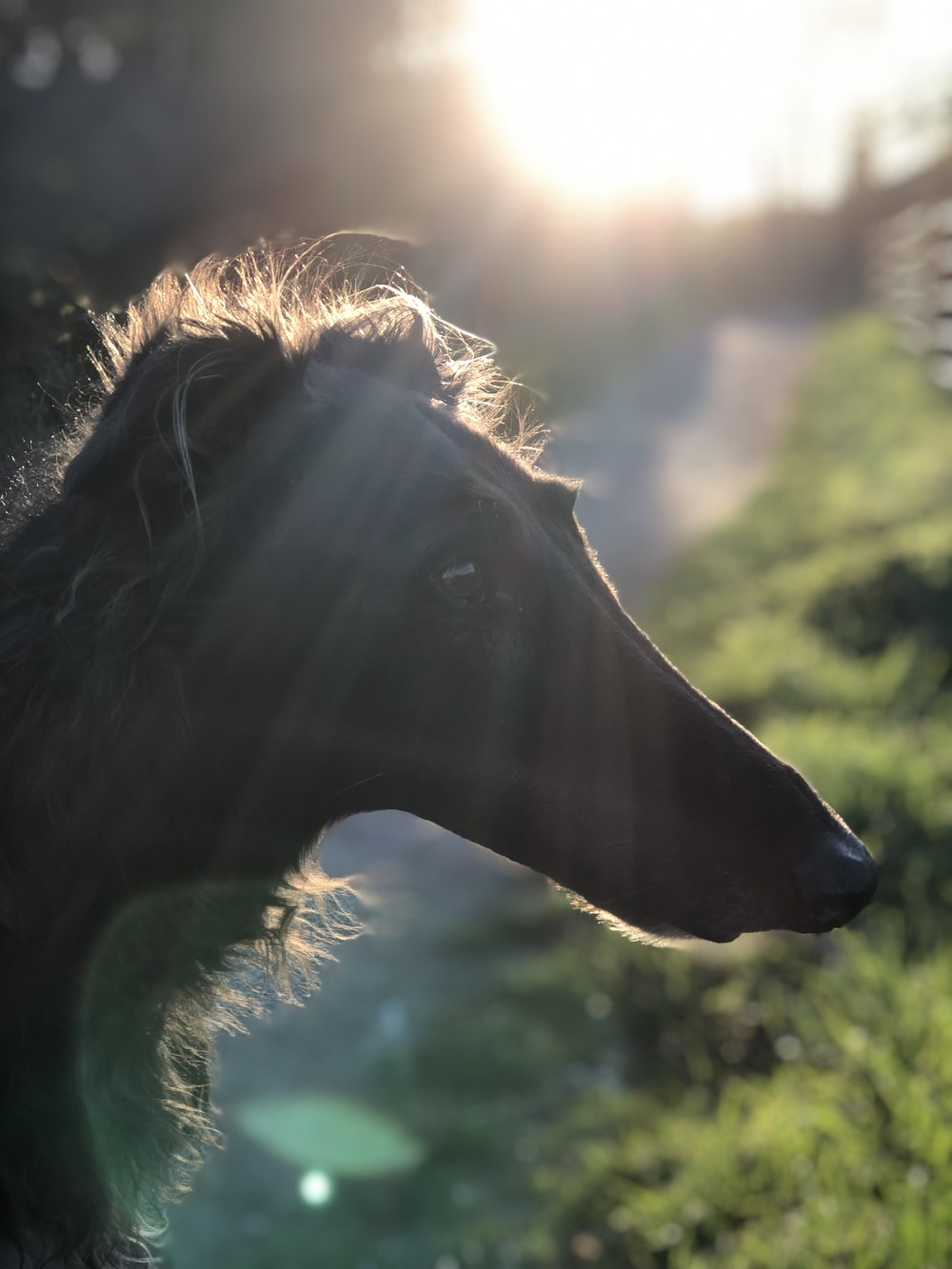 brown horse with blue eyes