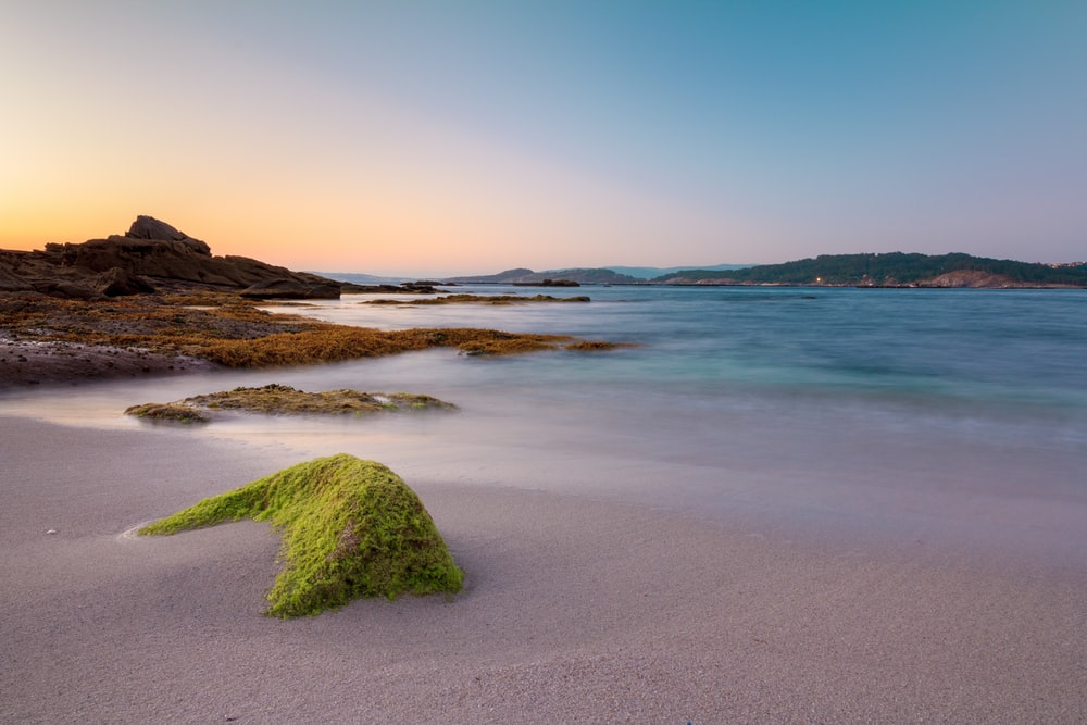green moss on brown sand near body of water during daytime