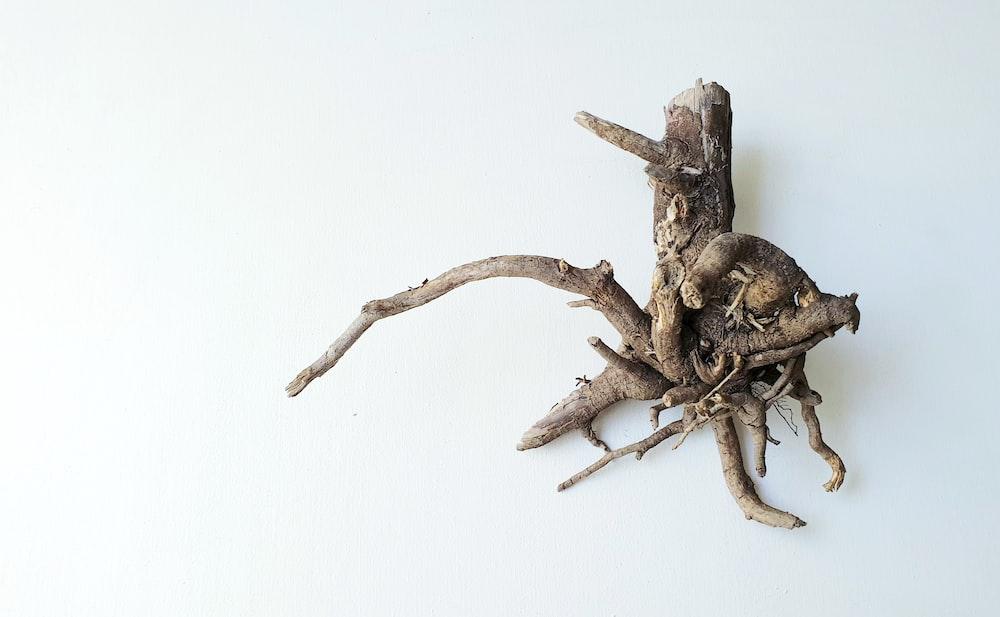 brown spider on brown wood