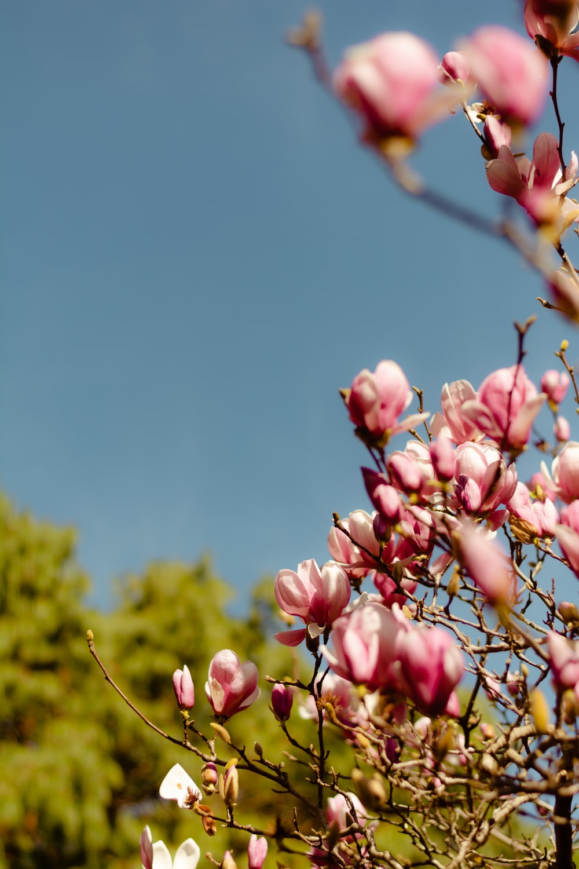 pink flower buds in tilt shift lens