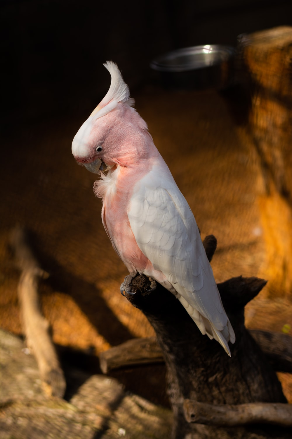 white and pink bird on brown tree branch