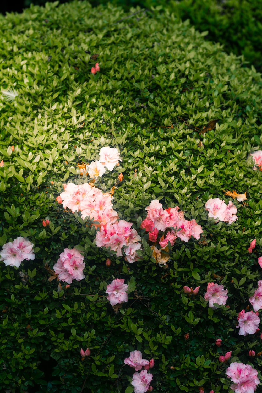pink and white flowers on green grass