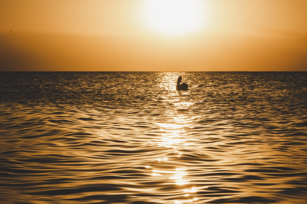 silhouette of 2 people swimming on sea during sunset