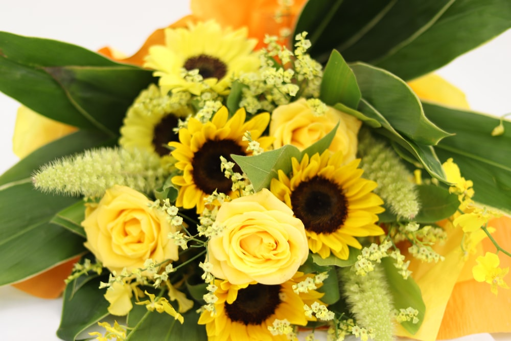 yellow and white flowers on orange flower