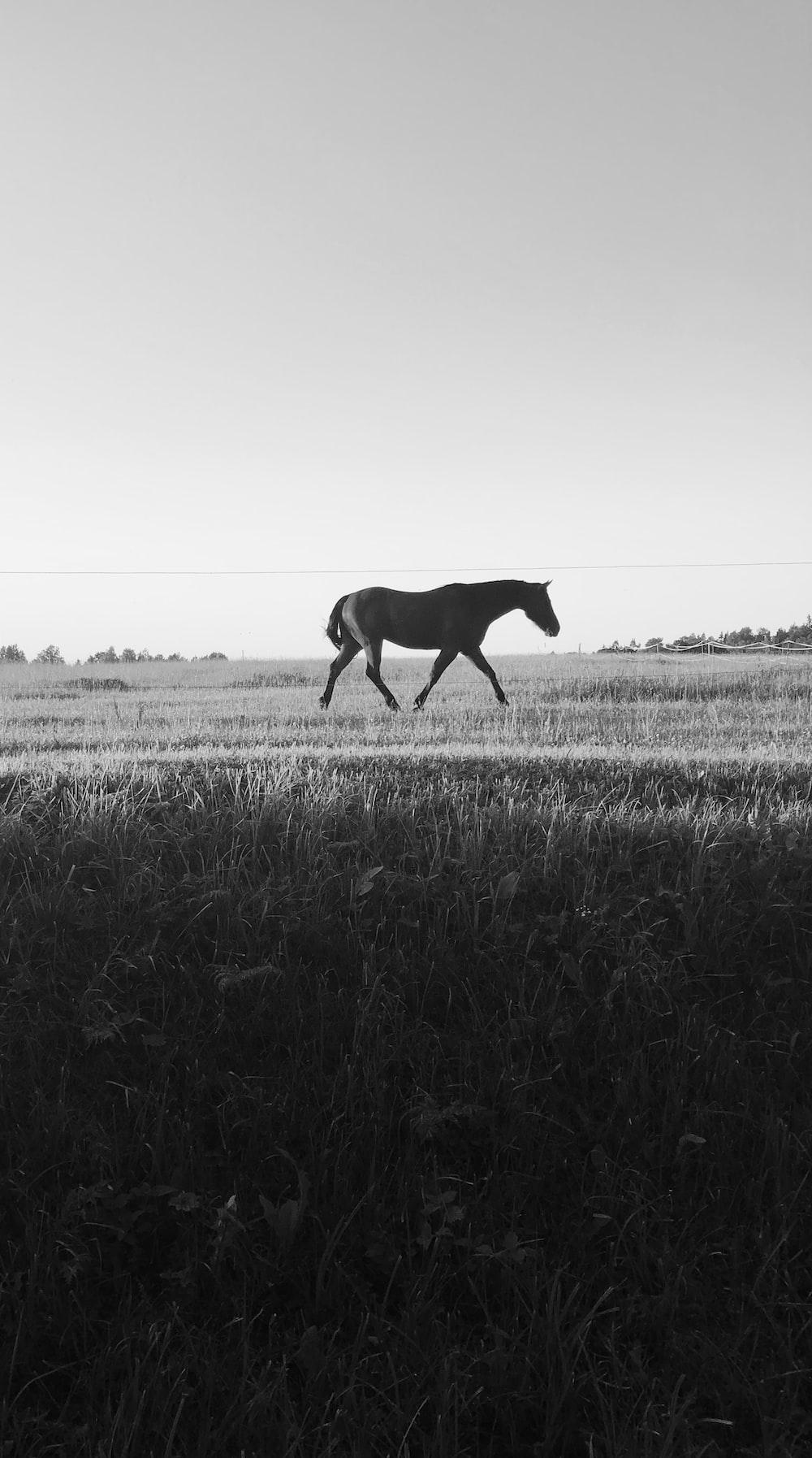 black horse on grass field