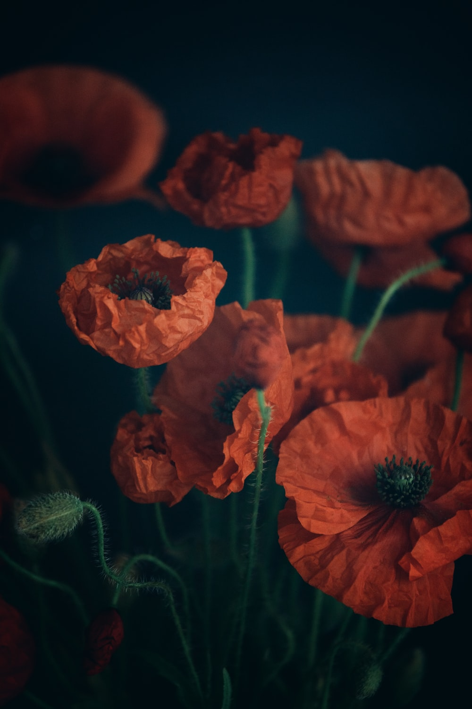 red flower in macro shot