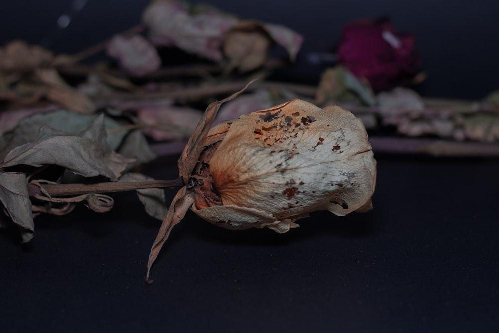 white garlic on black surface