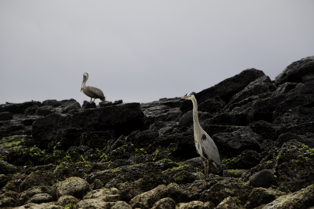 white and gray bird on brown rock during daytime