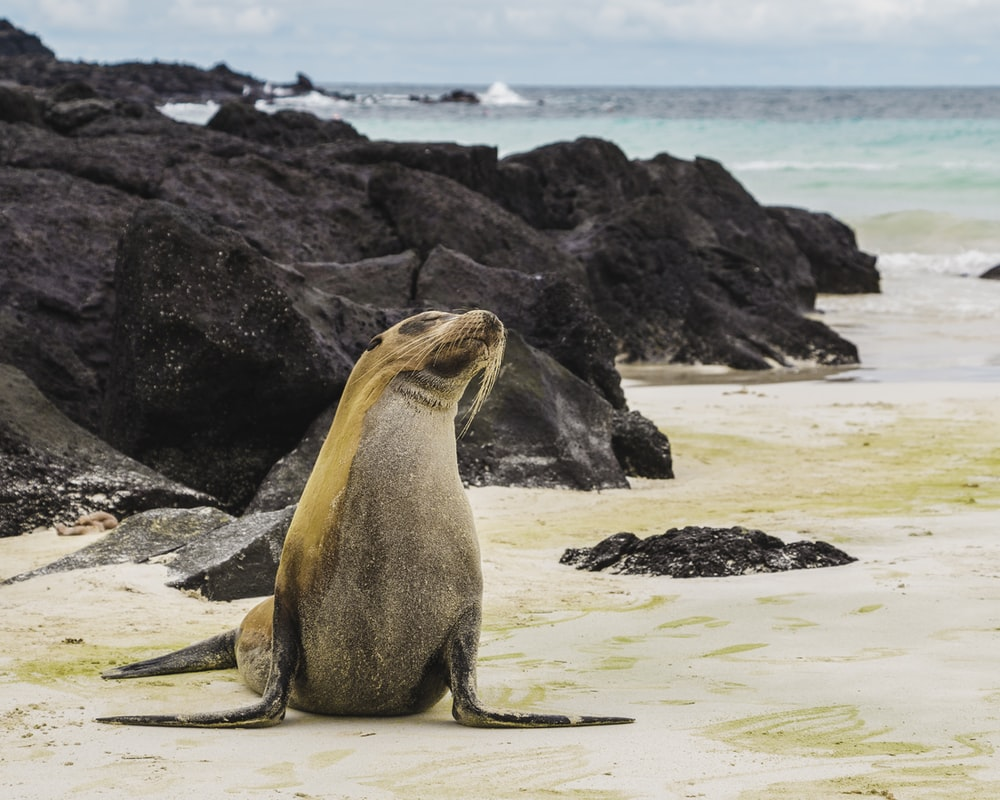 sea lion on white sand during daytime