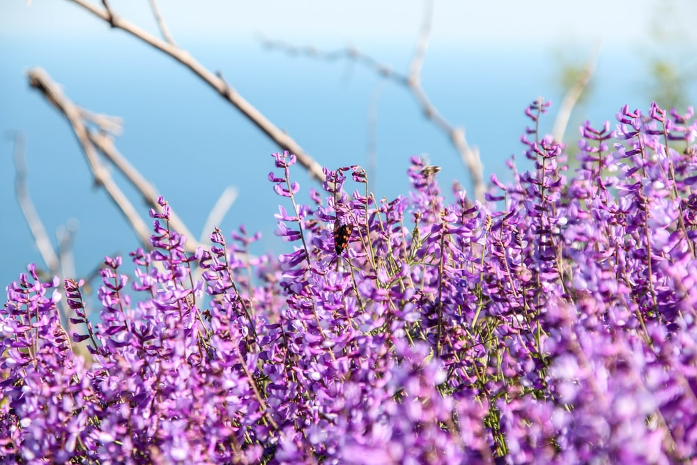 purple flowers on brown tree branch during daytime