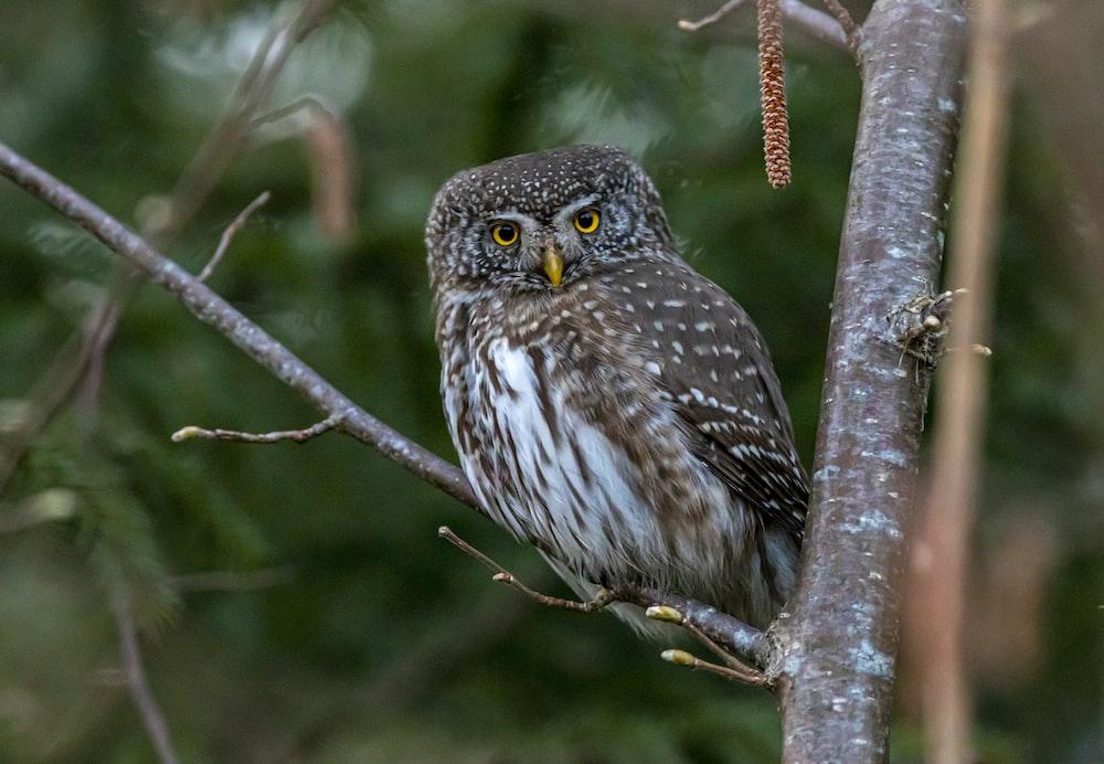 brown owl on brown tree branch during daytime