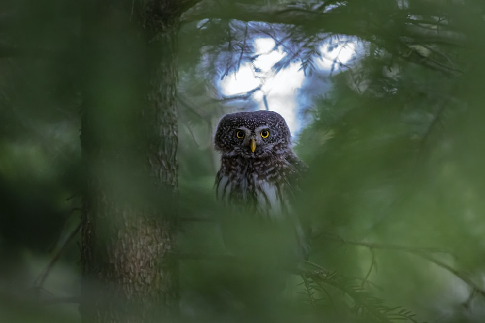 owl on tree branch during daytime
