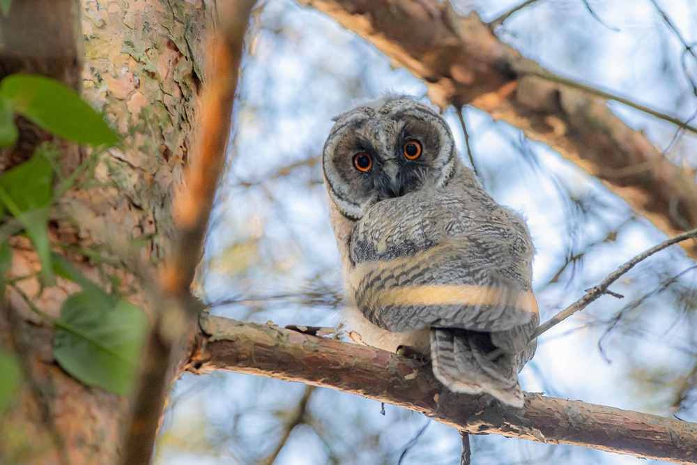 owl perched on brown tree branch during daytime