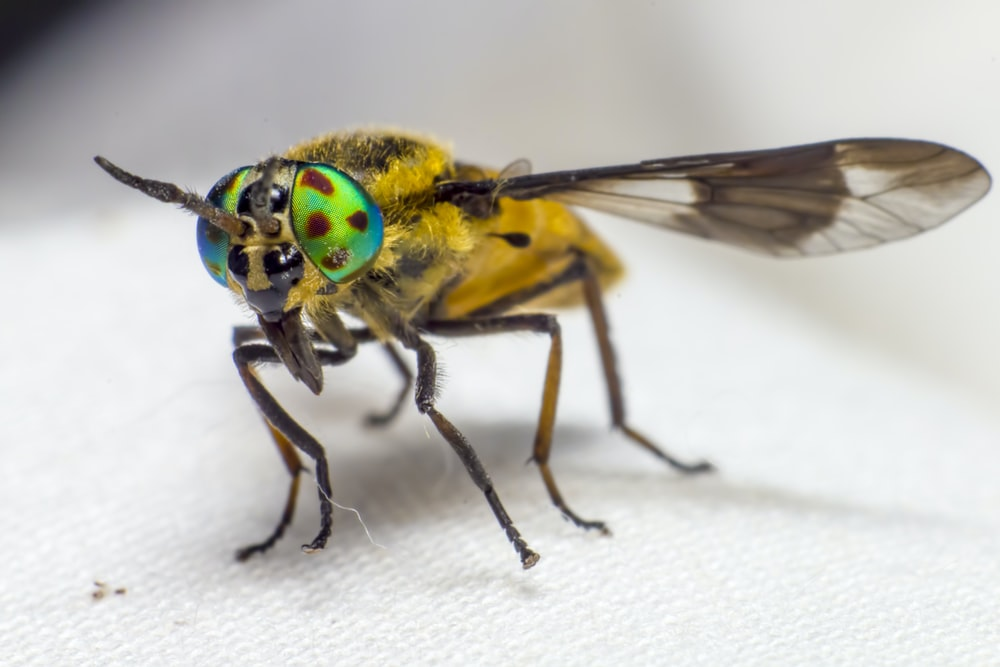 yellow and black insect on white textile